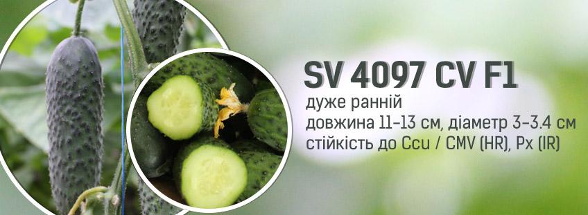 SV 4097 CV F1