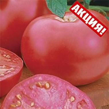 Пінк Леді F1 – Томат індетермінантний рожевий для споживання у свіжому вигляді, Seminis