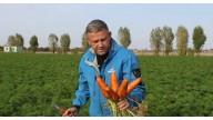 Абако F1 (Abaco F1) - гібрид ранньої моркви